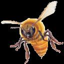 bee's gravatar image